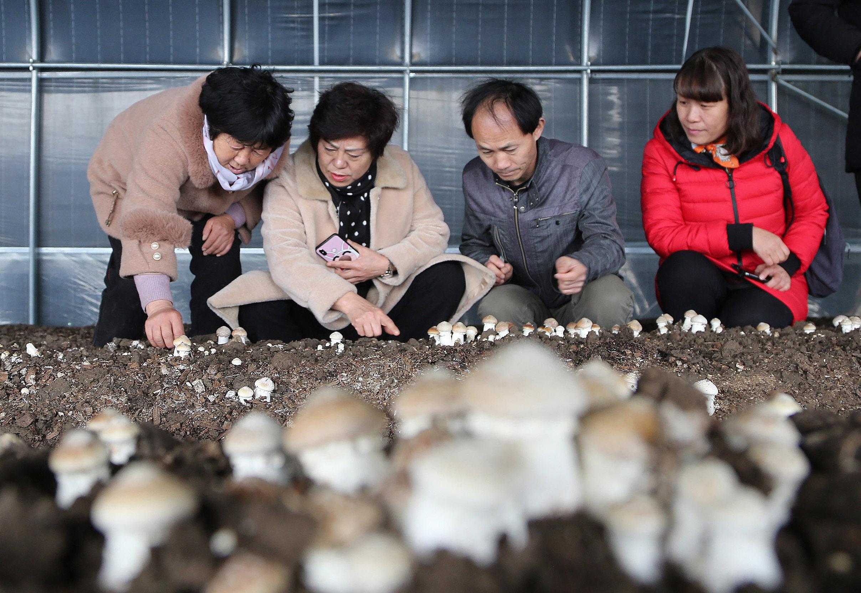 打造珍稀食用菌品牌 助推乡村振兴