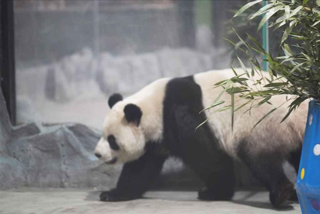 栾川竹海野生动物园:三千灵兽 百虎啸聚 国宝当家